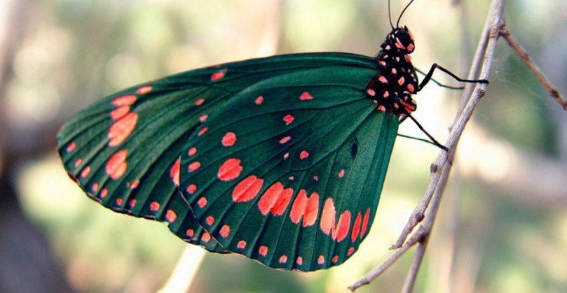 cropped-mariposa-venenosa.jpg